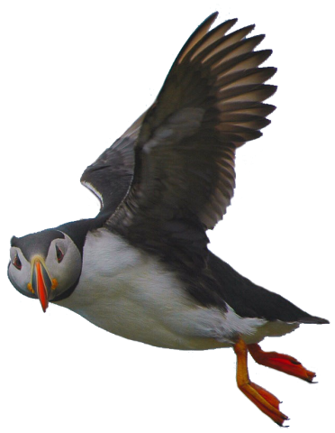 puffin-side